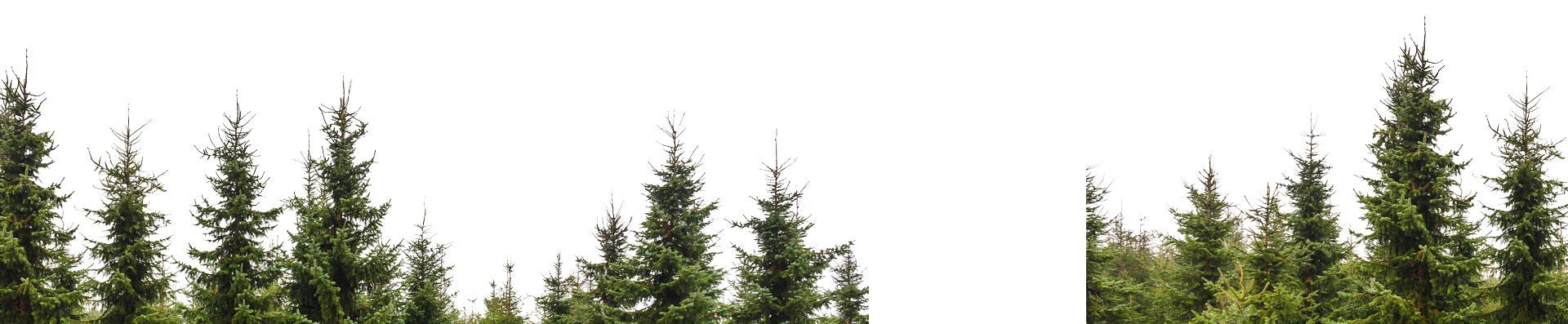 Backrop of trees