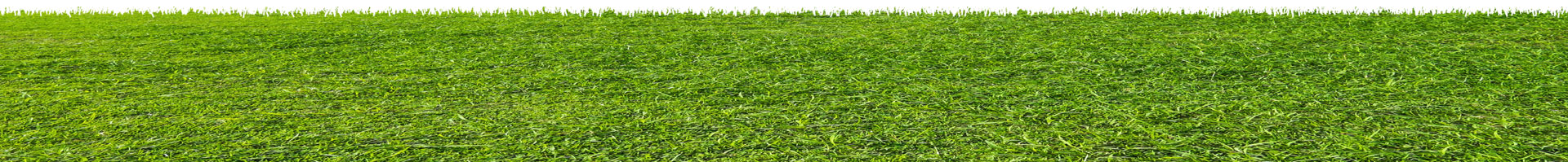 Background image of grass